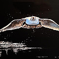 Seagull In The Moonlight by Barbara Andrews