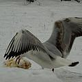 Seagull Joy Wintergarden 02 Denmark 2013 by Colette V Hera  Guggenheim