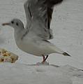 Seagull Landing01 Wintergarden 2013 Denmark by Colette V Hera  Guggenheim