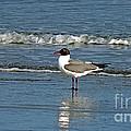 Seagull by Linda Vodzak