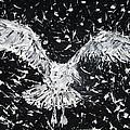 Seagull - Oil Portrait by Fabrizio Cassetta