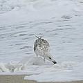 Seagull On The Beach by Adrienne Zulkoski