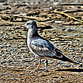 Seagull On The Beach by Alice Gipson