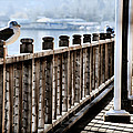 Seagull On The Boardwalk by Sally Bauer