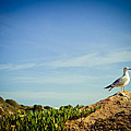 Seagull On The Rock by Raimond Klavins