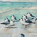 Seagull Party by Lise PICHE