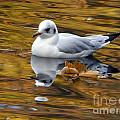 Seagull Resting Among Fall Leaves by Nili Tochner