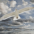 Seagull by Rick Mosher