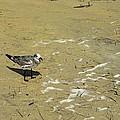 Seagull Scurry  by G Adam Orosco