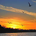 Seagull Serenity by Frozen in Time Fine Art Photography