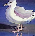 Seagull by Shirin Shahram Badie
