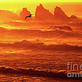 Seagull Soaring Over The Surf At Sunset Oregon Coast by Dave Welling