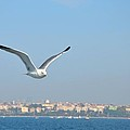 Seagull Soars In Breeze by Imran Ahmed