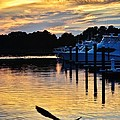 Seagull Sunset At The Indian River Marina Delaware by Kim Bemis