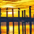 Seagull Sunset by Roy Pedersen