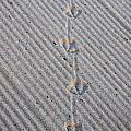 Seagull Tracks by Ray Konopaske