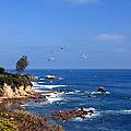 Seagulls At Laguna Beach by Kelly Holm