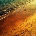 Seagulls At Sunset by RC DeWinter