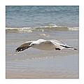 Seagulls by Carole Lloyd