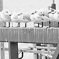 Seagulls In A Row by Chevy Fleet
