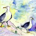 Seagulls In Calpe In Spain by Miki De Goodaboom