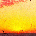 Seagulls by Lars Lentz