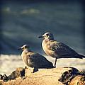 Seagulls On A Beach by Yulia Kazansky