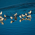 Seagulls On Frozen Lake by Andreas Berthold