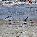 Seagulls On The Beach by Sennie Pierson
