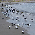 Seagulls On The Delaware Bay by Bill Cannon