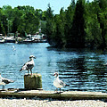 Seagulls On The Pier by Susan Savad