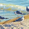 Seagulls On Wall by Carol McGunagle