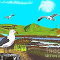 Seagulls by Paul Fields