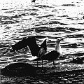 Seagulls  by Ramon Martinez