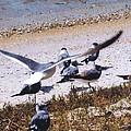 Seagulls by Robert Floyd