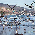Seagulls Seagulls And More Seagulls by Jerry Cowart