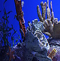 Seahorses by Laurie Perry