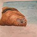Seal 1 by Kathy Carothers