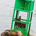 Seal Hammock by Scott Campbell