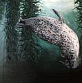 Seal In The Kelp by Mackenzie Moulton