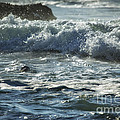 Seal Surfing Waves by Belinda Greb