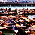 Seal Wharf by Glenn Aker
