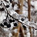 Sealed In Ice by Irfan Gillani