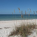 Seaoats And Beach by Christiane Schulze Art And Photography