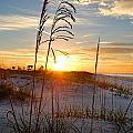 Seaoats Sunrise by Michael Thomas