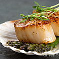 Seared Scallops by Jane Rix