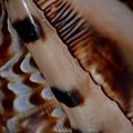 Seashell Abstract 2 by Maria Urso