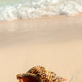 Seashell And Ocean Wave by Elena Elisseeva