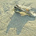 Seashell And Shadow On Sand by Mother Nature