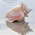 Seashell Be Still by Constance Woods
